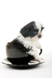 Puppy In A Cup Stock Photography