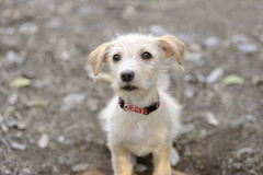 Puppy Cute stock photography