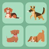 Puppy cute playing dogs characters funny purebred comic happy mammal doggy breed vector illustration. Puppy vector illustration cute dogs characters funny stock illustration