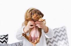 Puppy of a dachshund in hands of the little girl. Horizontal portrait stock images