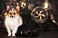 Puppy on a dark background in the style of steampunk Stock Photography