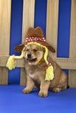 Puppy dat hoed en vlechten draagt door omheining. Stock Fotografie