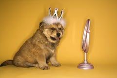 Puppy dat kroon draagt royalty-vrije stock afbeeldingen