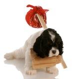 Puppy dat nieuw huis zoekt royalty-vrije stock foto