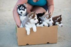 Puppy in de doos royalty-vrije stock fotografie