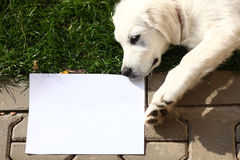 Puppy delivering message on blank paper Stock Image