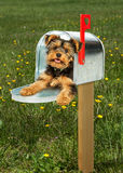 Puppy Delivery in Mailbox Outdoors Royalty Free Stock Image
