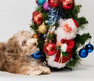 Puppy dichtbij Kerstboom stock foto