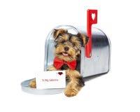 Puppy die de Kaart van de Valentijnskaartendag leveren Stock Foto's