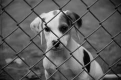 Puppy die door ketting-Verbinding Omheining kijken Royalty-vrije Stock Afbeeldingen