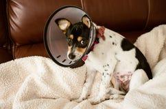 Puppy die een duidelijke kegel van schandehalsband dragen stock fotografie