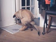 Puppy die een poo op de vloer doen Royalty-vrije Stock Foto's