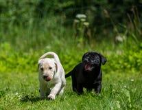 Puppy die pret op een zonnige dag hebben royalty-vrije stock fotografie