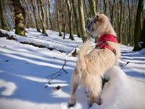 Puppy die zich op een boomstam in een sneeuwbos bevinden stock afbeelding