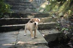 Puppy die zich op oude plaats bevinden Stock Foto