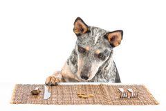 Puppy Dinner Royalty Free Stock Photography