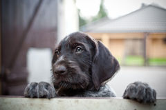 Puppy dog. Needs someone to play with royalty free stock images