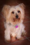 Puppy Dog. A very cute small furry puppy dog with a dreamy filter applied Royalty Free Stock Photo