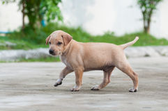 Puppy dog alone on the street Stock Photography
