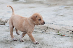 Puppy dog alone on the street Stock Image