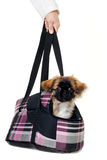 Puppy dog in bag Stock Photo