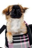 Puppy dog in bag Royalty Free Stock Image