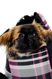 Puppy dog in bag Royalty Free Stock Images