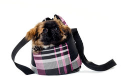 Puppy dog in bag Royalty Free Stock Photos