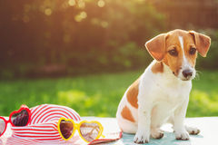 Puppy dog basking in the sun soft focus. Dog basking in the sun soft focus stock photos