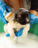 Puppy dog in bath tub Stock Image