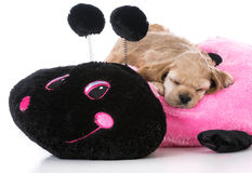 Puppy on dog bed Royalty Free Stock Photography
