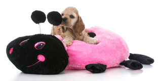 Puppy on dog bed Stock Photography
