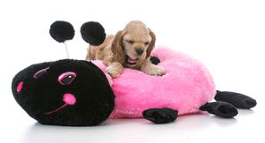 Puppy on dog bed Stock Image