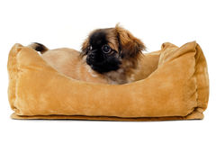 Puppy in dog bed stock images