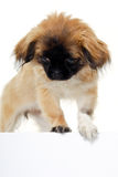 Puppy dog and blank sign Stock Photo