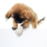 Puppy dog and blank sign Stock Images