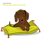 Puppy dog of breed a Dachshund Stock Images
