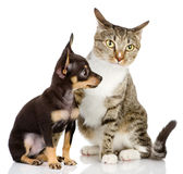 The puppy dog and cat. Stock Photo