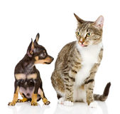 The puppy dog and cat Stock Image