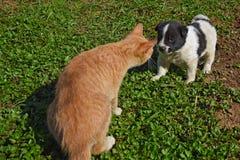 Puppy dog cat Stock Image