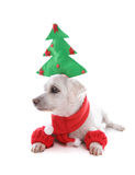 Puppy dog at Christmas time. Small white pet dog wearing a decorative Christmas tree and looking sideways, suitable for a message Royalty Free Stock Photos
