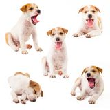 Puppy Dog Collection Stock Photo