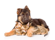 Puppy dog embracing little kittens. isolated on white background Stock Image