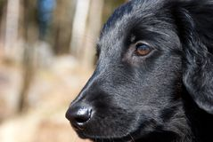 Close puppy dog face Royalty Free Stock Images
