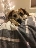 Puppy dog flannel stock photos