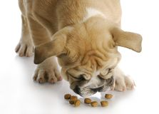 Puppy with dog food stock photos