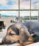 Puppy dog forgotten at the airport Stock Photo