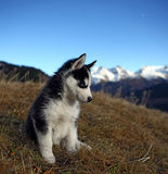 Puppy Dog in front of a Mountain Scenery Stock Photo