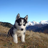 Puppy Dog in front of a Mountain Scenery stock image