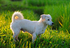 Puppy dog in green meadow grass stock photography